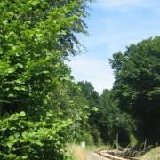 140-gleisdreeick-ostuferbahn